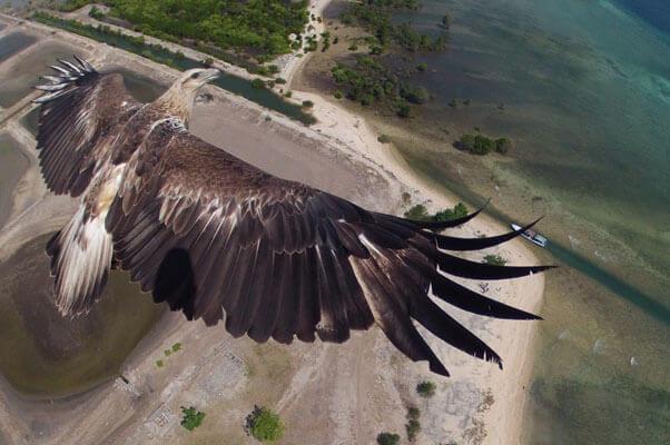 Индонезия фото орла